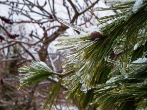 Ice storm in early February