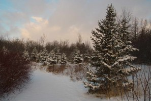 Christmas card scenery