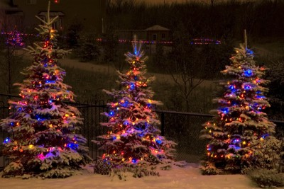 Image of Christmas lights on spruce trees