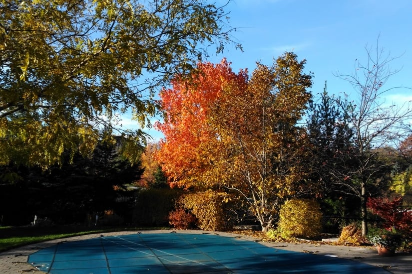 Picture of tree in Fall colours